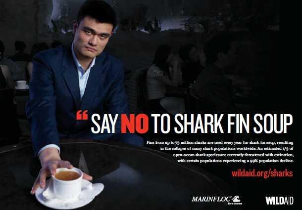 Shark Fins
